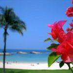 ハワイで日焼け止め規制法が成立!皮膚がんのリスクは?